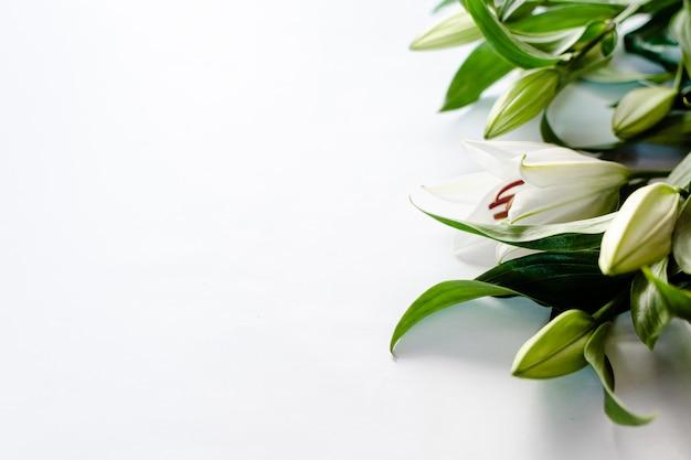 白い背景で隔離のユリの花。聖バレンタインと婚約の概念。