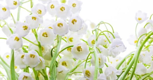 スズランの花がクローズアップ