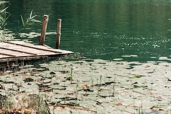 Lily pads floating on pond near the pier