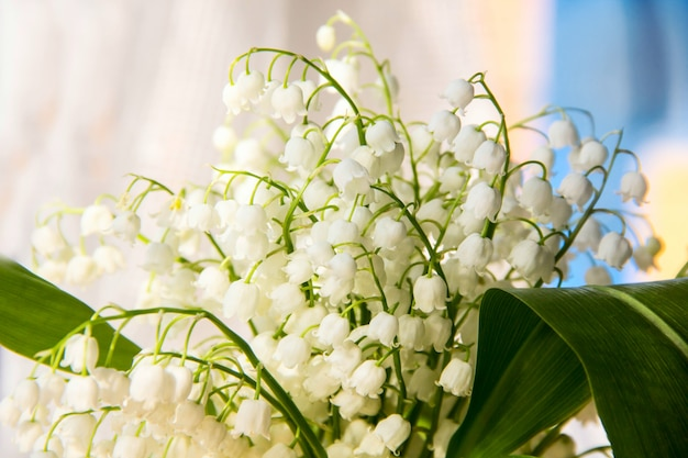 Lily of the valley flowers. natural with blooming lilies of the valley lilies-of-the-valley