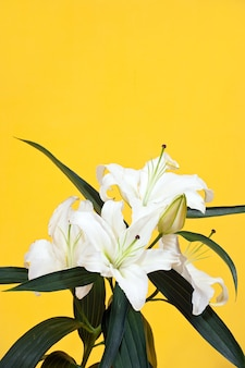 Lily on yellow