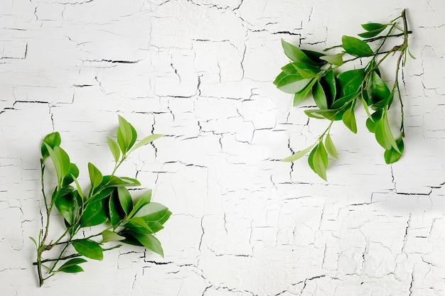 Lime leaves on a cracked wooden table