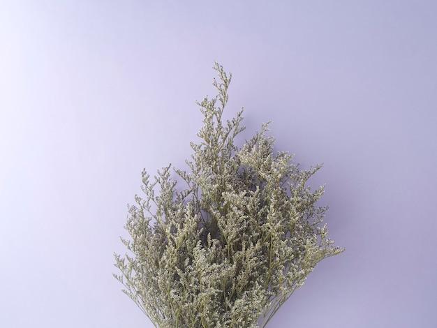 紫色の背景に分離された小さな紫色のlimoniumドライフラワー