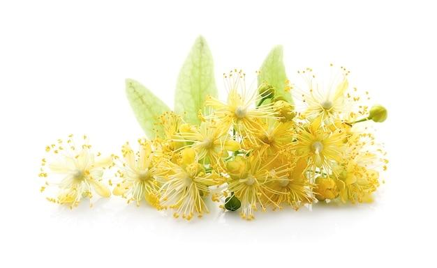 白にリンデンの花