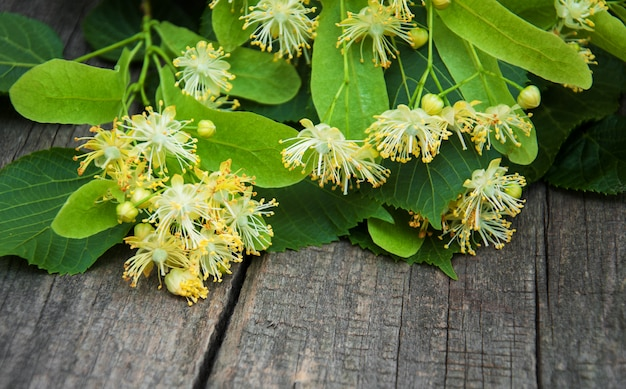 Linden flowers on the table
