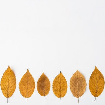 Line of autumn leaves