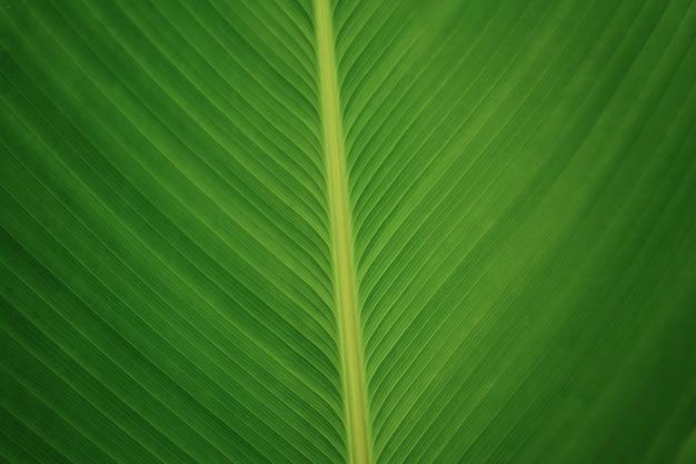 自然の緑の葉の線と質感が閉じた