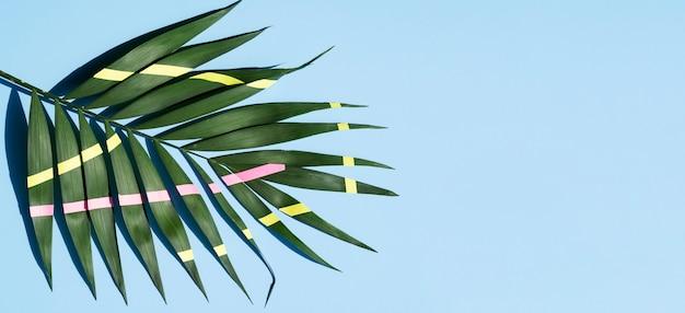Линии на листьях папоротника с копией пространства фон