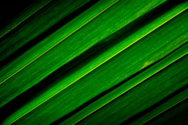 Lines and textures of green palm coconut leaves