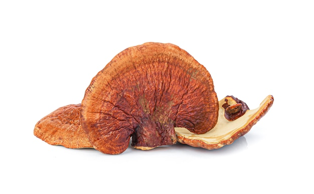 Lingzhi mushroom ganoderma lucidum isolated