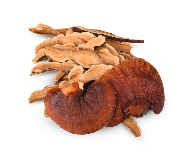 Lingzhi mushroom have medicinal properties and on a white background.