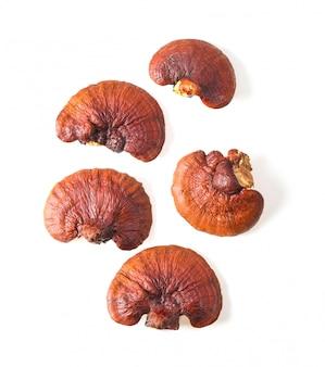 Lingzhi mushroom isolated on white surface