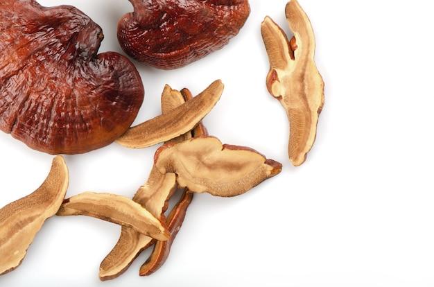 Lingzhi mushroom pieces isolated