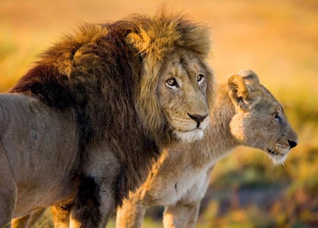 Лев и львица стоят вместе