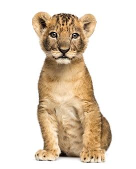 ライオンの子座って白で隔離されるカメラを見て