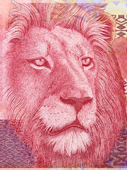 Lion a portrait from south african money