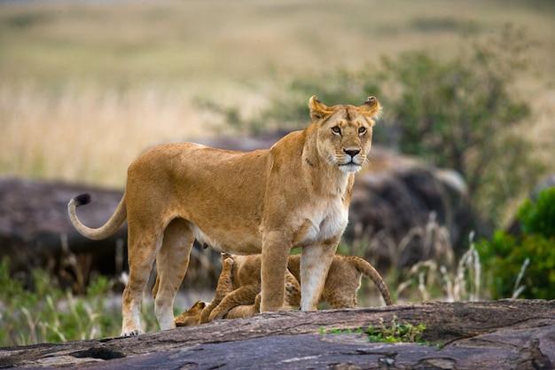 Львица и ее детеныш на большом камне. национальный парк. кения. танзания. масаи мара. серенгети.