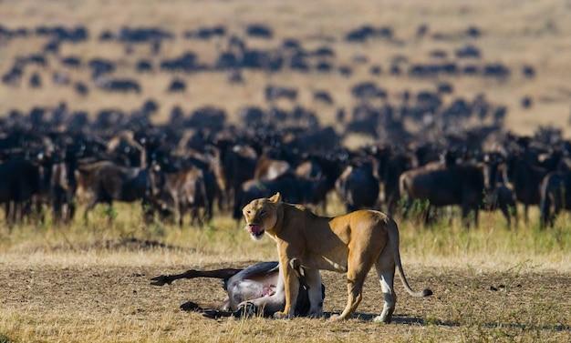 Львица убила гну