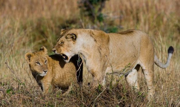 Львица с детенышами в саванне. национальный парк. кения. танзания. масаи мара. серенгети.