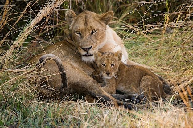 Львица с детенышами