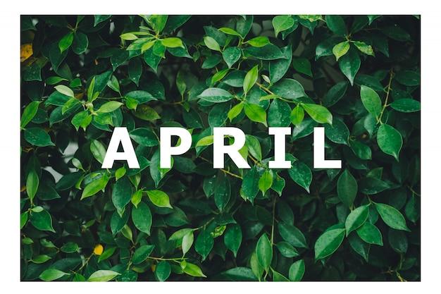 List of calendar months designed on a natural green leaf background