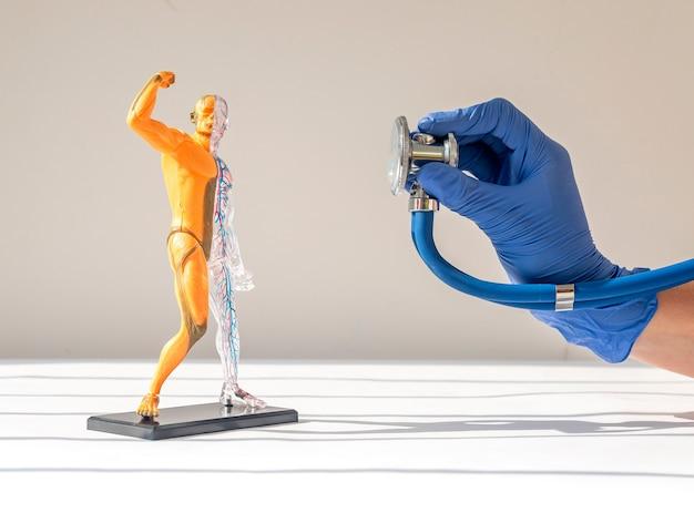Прослушивание модели человеческого тела без кожи с анатомией и диагностикой кровеносной и мышечной систем ...