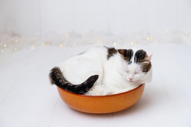 Little adorable cat near christmas decorations