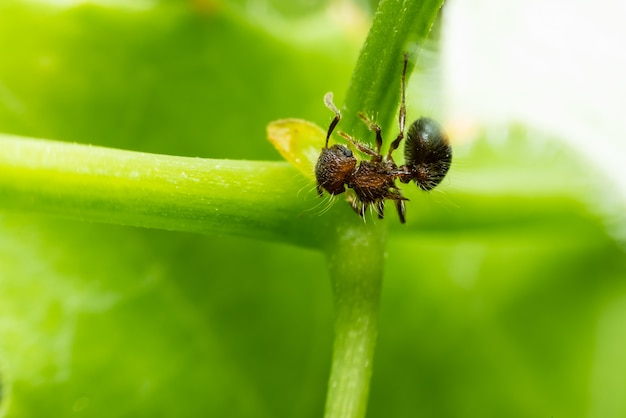 A little ant climbing on the vine