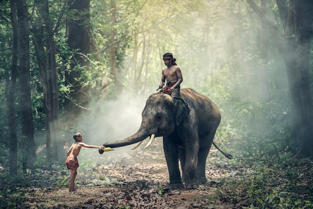 Little asian boy feeding elephant