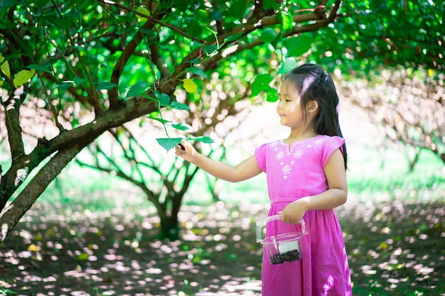 Little asian girl collect the mulberry fruit in the garden