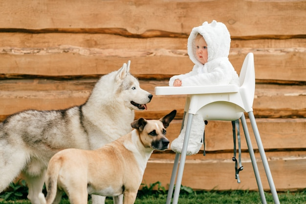 Little baby in bear costume sitting in high chair outdoor with playful dogs looking at him.