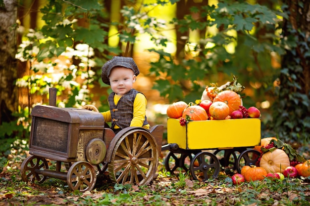 Little baby boy in a tractor with pumpkins, viburnum, rowan, apples