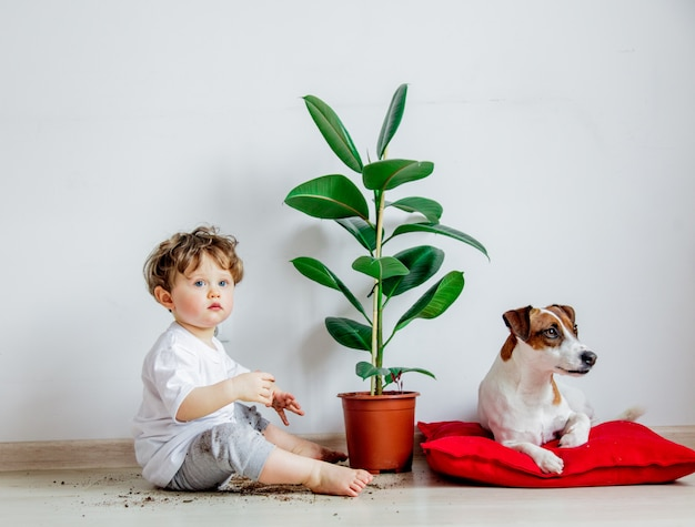 Little baby boy with plant and dog sitting on a floor