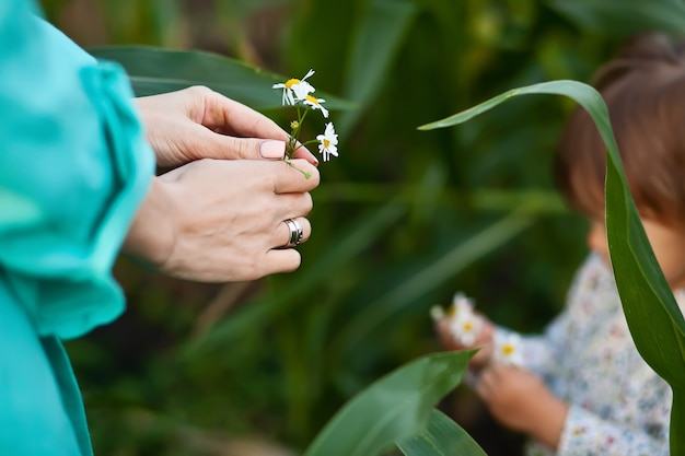 Little baby girl daughter gives mother a flower chamomile.