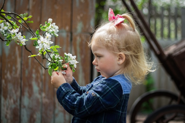 Little baby girl walks in the garden pulling her hand to a blossoming cherry branch.