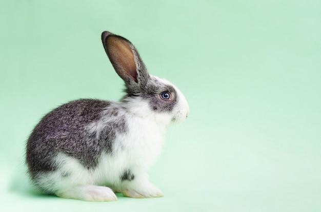 緑の部屋の小さな赤ちゃんウサギ Premium写真