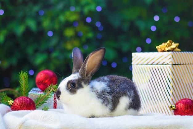 ギフト用の箱とクリスマスツリーの下の赤いボールと小さな赤ちゃんウサギ。新年のペット。カード、バニーのはがき