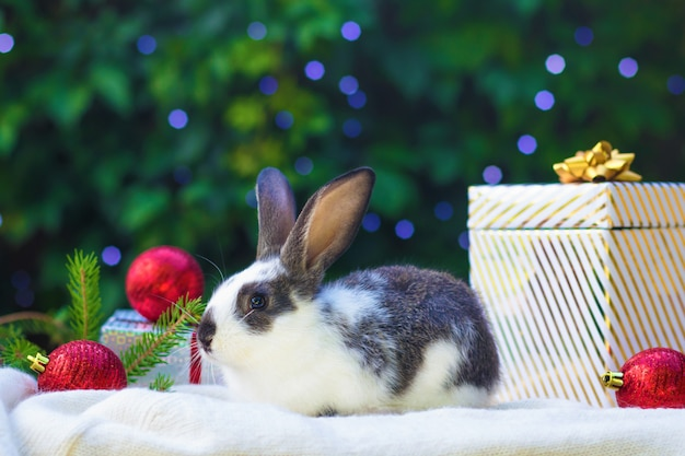 Little baby rabbit with gift boxes and red balls under the christmas tree. pet for new year. card, postcard with bunny