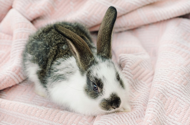 Little baby rabbit