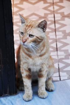 문 앞에 있는 작고 아름다운 고양이. 고양이의 클로즈업입니다.
