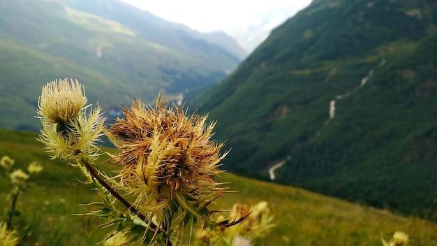 Маленький красивый цветок в горах