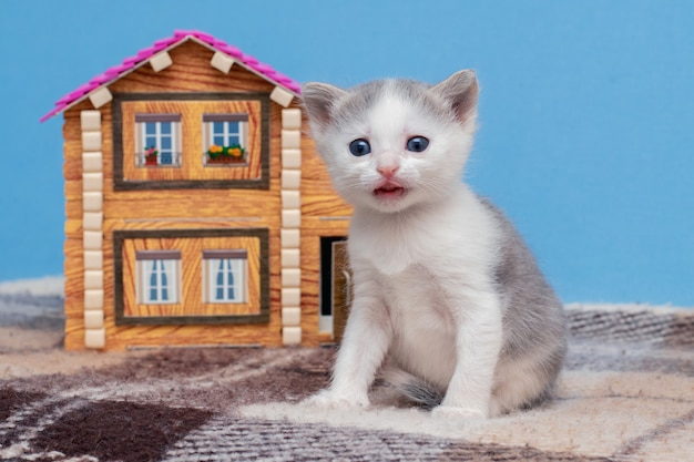 おもちゃの家の近くの小さな美しい子猫。家を買う。