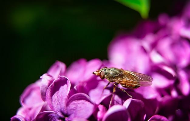 紫色の花に小さな蜂