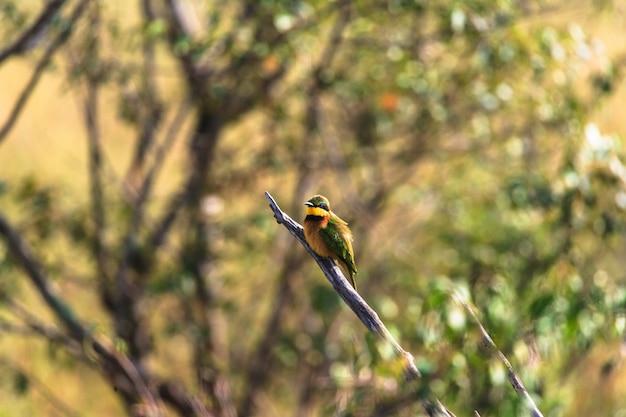 小さい鳥。枝にハチクイ