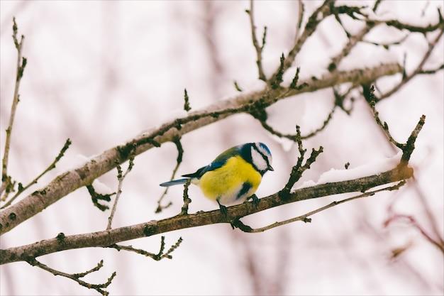 木の枝に小さな鳥の四十雀