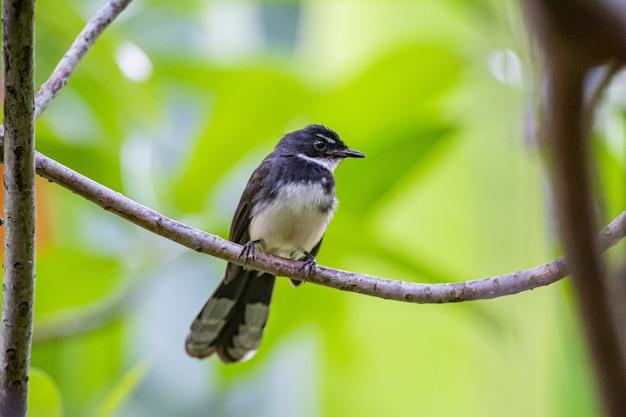 木の枝に座っている小鳥