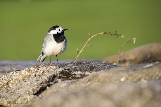 Little bird standing on rock close up