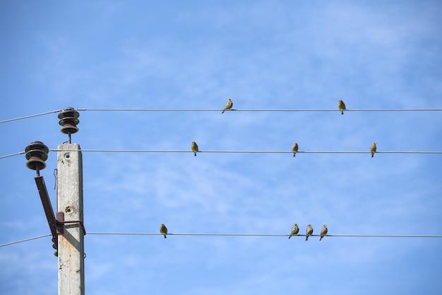 전선에 앉아 작은 새. 푸른 하늘에 대하여