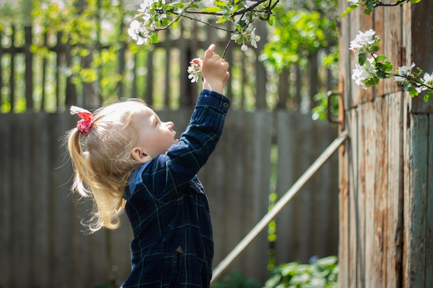 Little blond baby pulls his hand to a flowering cherry branch in the garden.