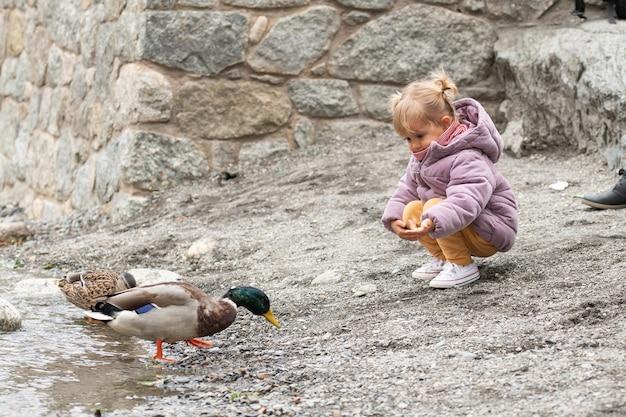 강에 몇 가지 오리를 먹이 금발 소녀 프리미엄 사진